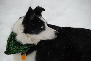 maggie in snow